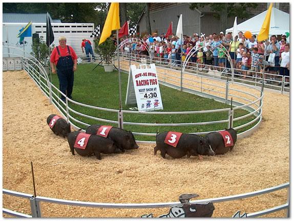 fair-pig-race.jpg