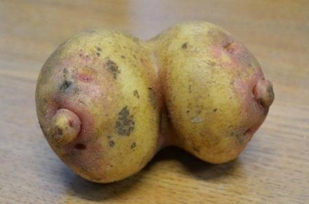 patataseno