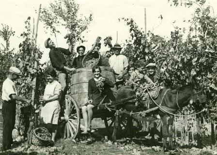 vendemmia-1940-1950_